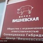 Натуральности и безопасности мясной продукции ООО «СГЦ «Вишневский» можно доверять.
